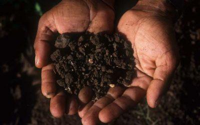 Kompostierung für Einsteiger